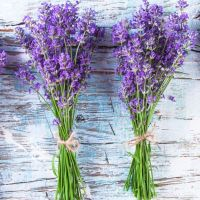 Adding lavender to your haircare regime 👏👌🌱