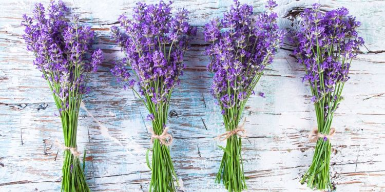 ways-to-use-lavender-1519763196